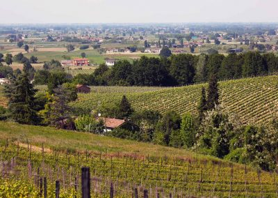 Vineyards Le Fracce - Overview